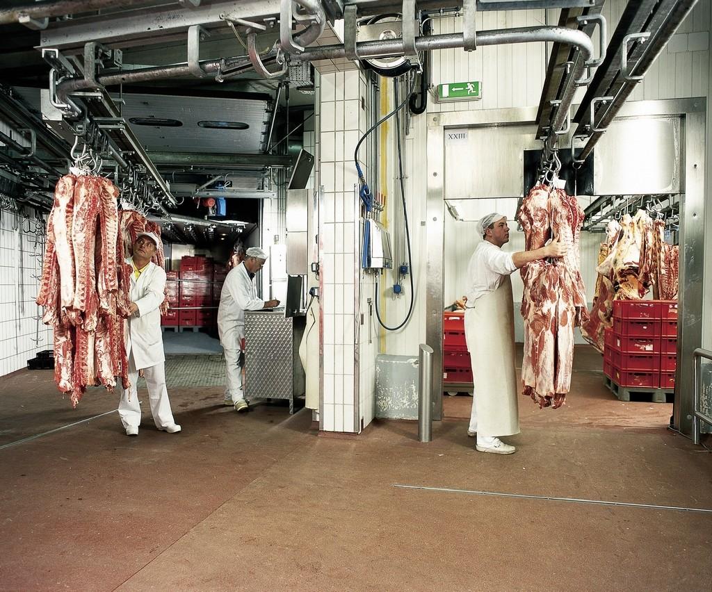 ציפויים למפעלי מזון